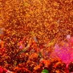 क्यों वृंदावन और मथुरा में फुलेरा दूज(phulera dooj) के दिन फूल होली खेलीं जाती है ?