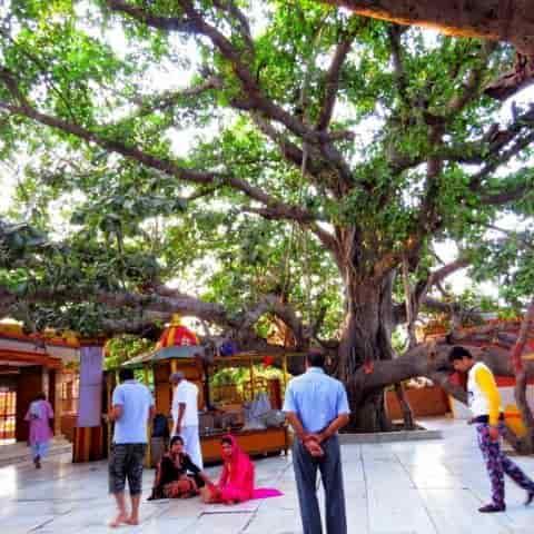 शुक्रताल का प्राचीन अक्षवत वृक्ष