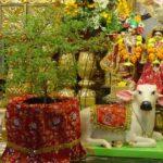 Tulsi Vivah 2020 Date तुलसी विवाह कब है? जानिए शुभ मुहूर्त,महत्व, पूजा विधि और कथा